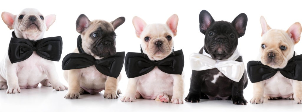 Check out the cutest puppies at All Star Family Puppies. The reviews will not disappoint.
