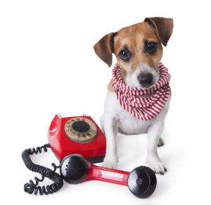 Contact All Star Family Pets Today!