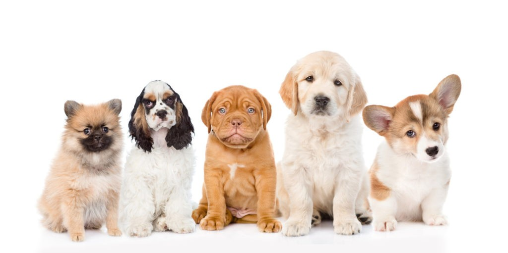 variety of puppies for review page image.
